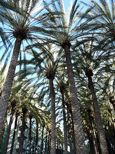 The Convention Center is surrounded by tall palms- not something I see in New York!