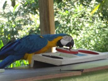 2017.06.17-028 spectacle de perroquets