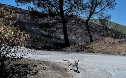 Σπεύδει να βοηθήσει τα τραυματισμένα ζωάκια των Γερανείων ο δήμος Βριλησσίων