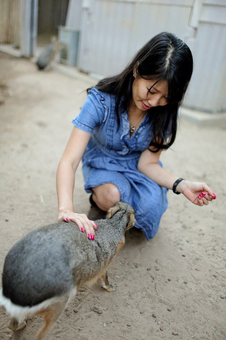 Petting a Patagonian Mara at Roos n More Zoo Moapa NV.