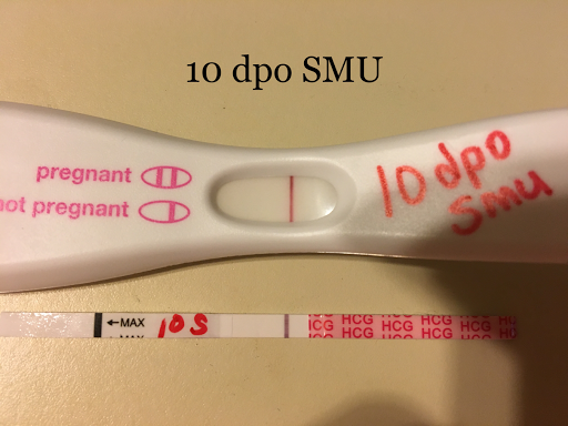 Cycle #5 ~ 10 dpo