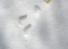rabbit tracks.jpg