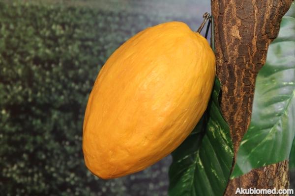 replika buah koko