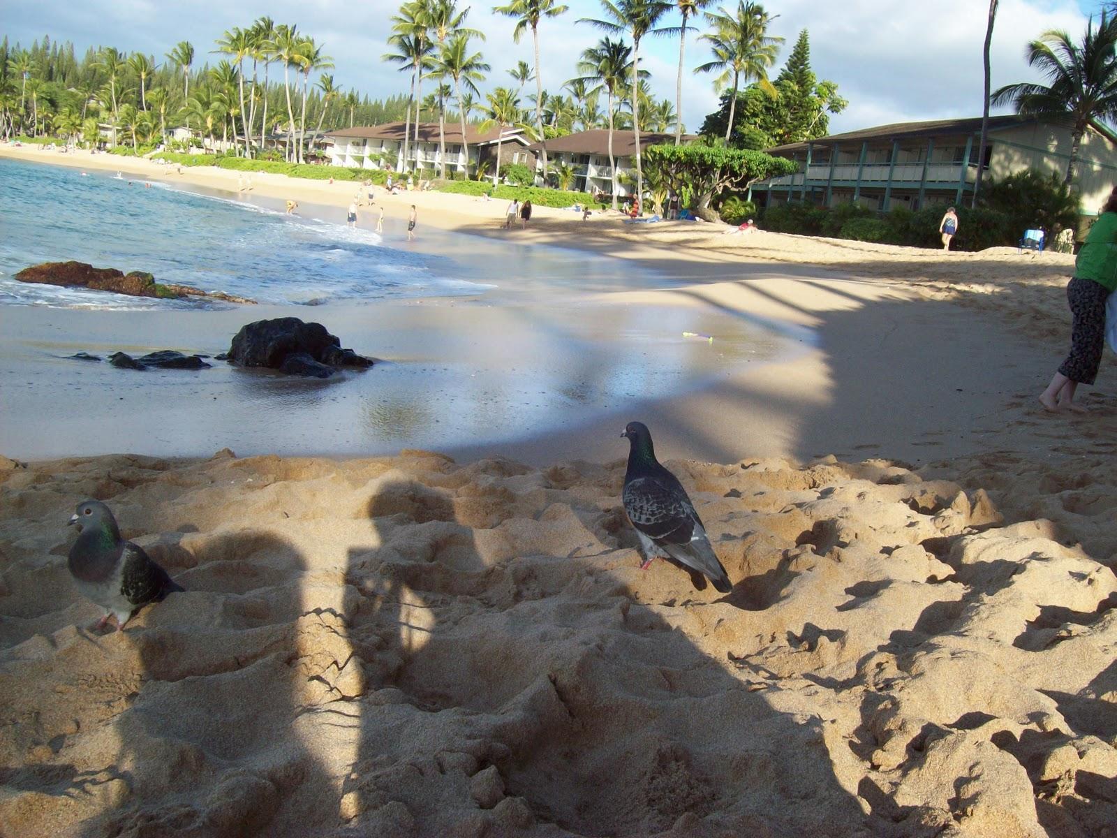Hawaii Day 7 - 100_7956.JPG