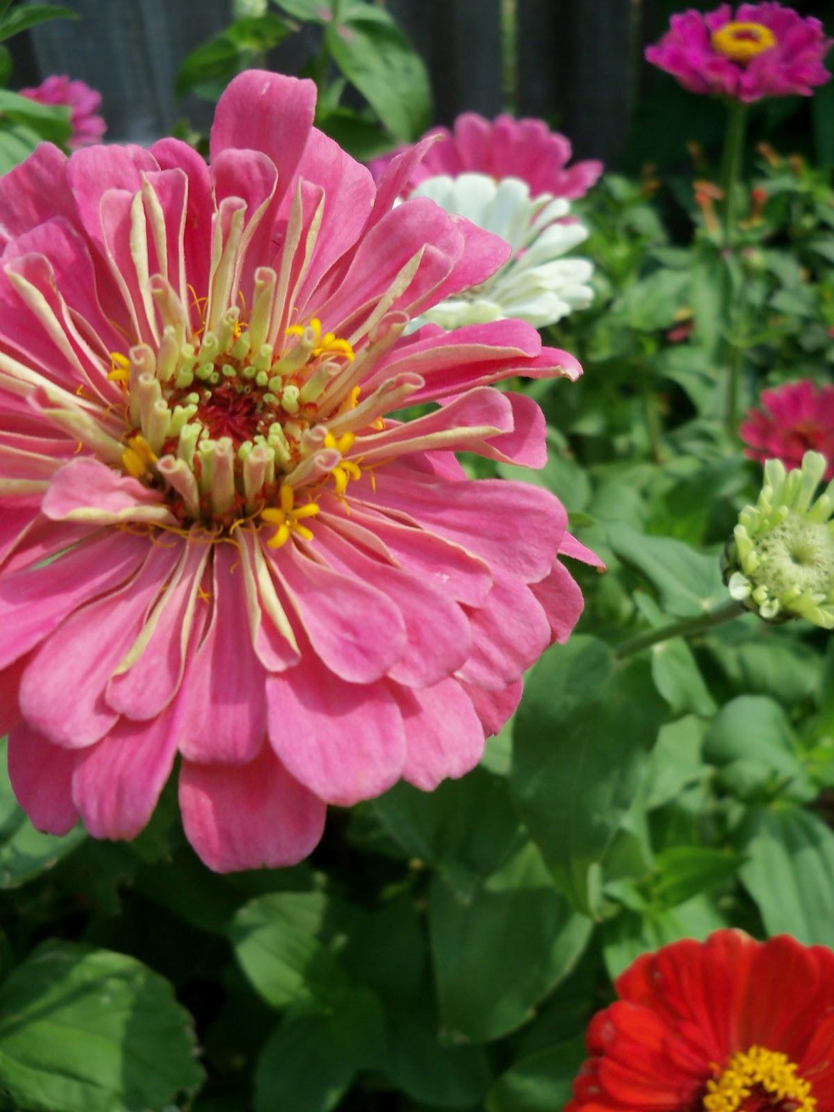 Gardening 2011 - 100_8621.JPG