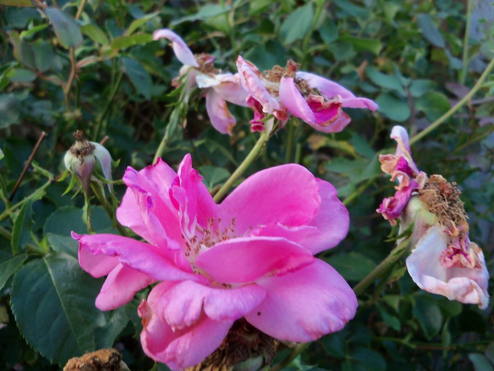Gardening 2012 - 115_2060.JPG
