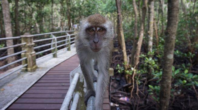 Ngakak! Kena Begal Monyet, Pria Ini Masih Sempat Makan Suapan Terakhir