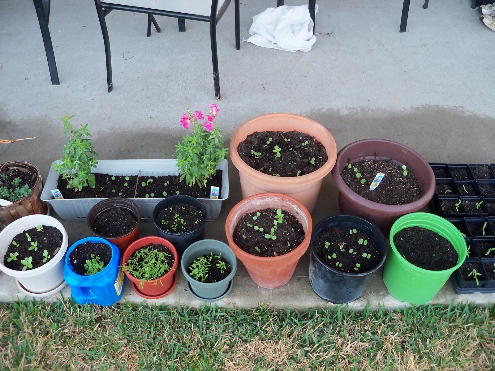 Gardening 2011 - 100_6758.JPG