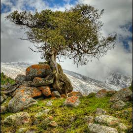mountain loner by Petr Klingr - Nature Up Close Trees & Bushes ( mountain, hdri, rocks, hdr, tree, clouds )