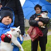 Nabożeństwo dla sympatyków i opiekunów zwierząt