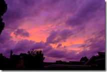 Finished in Lightroom, a little contrast & saturation of purples