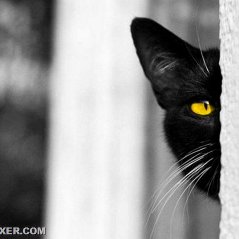Тайная жизнь кошек…