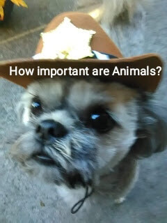 How important are Animals?