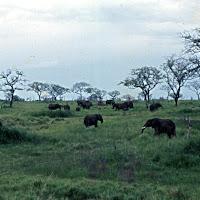 69 elephants.jpg