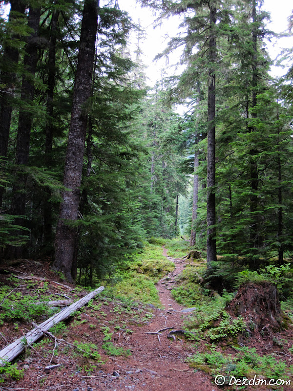 A little trail heads off into the forest.