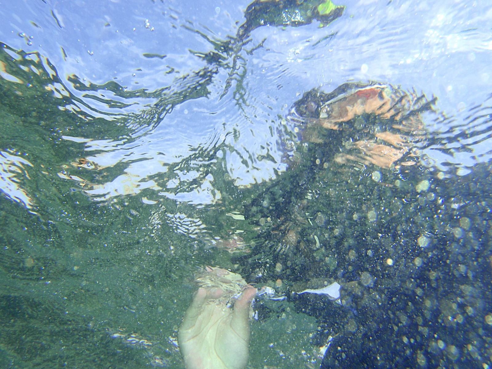 Monogràfic Marí 2010 - P5300343.JPG