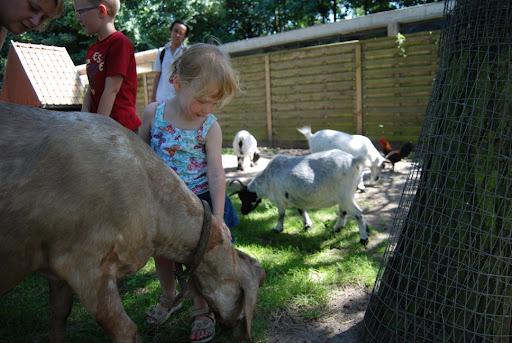 Er waren ook geitjes met hele lange oren