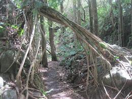 Pipiwai Trail, Haleakala National Park.