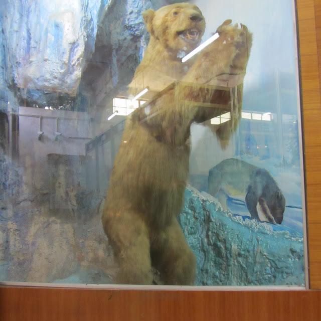 Polar Bear (allegedly!) - Gandhi Museum, Madurai, India