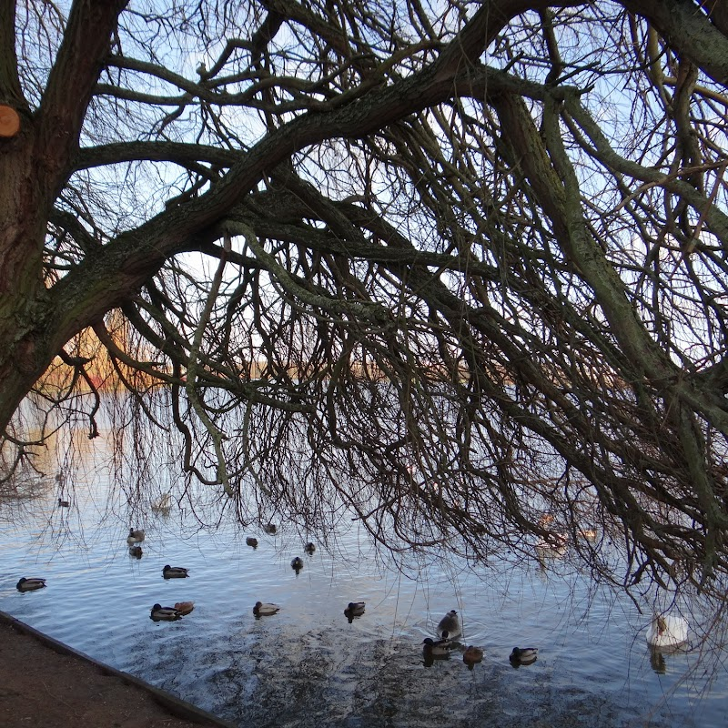 Willen_Lake_03.JPG