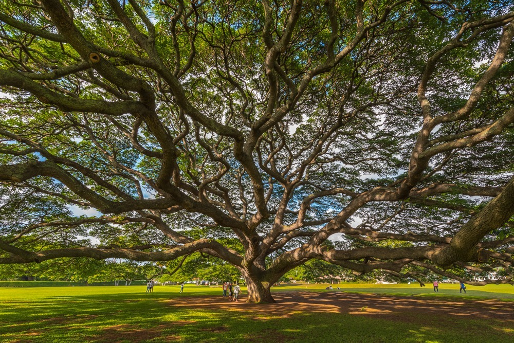hitachi-tree-2