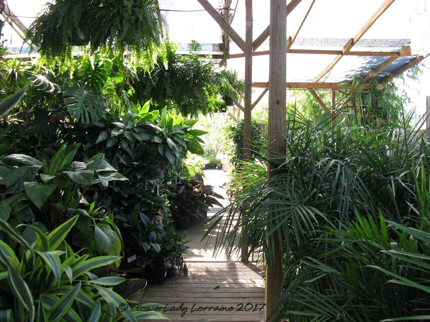 [05-08-foliage-plants2%5B4%5D]