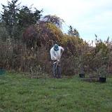 Hammo Fall Planting - Jim Murtagh - BC3G2506.jpg