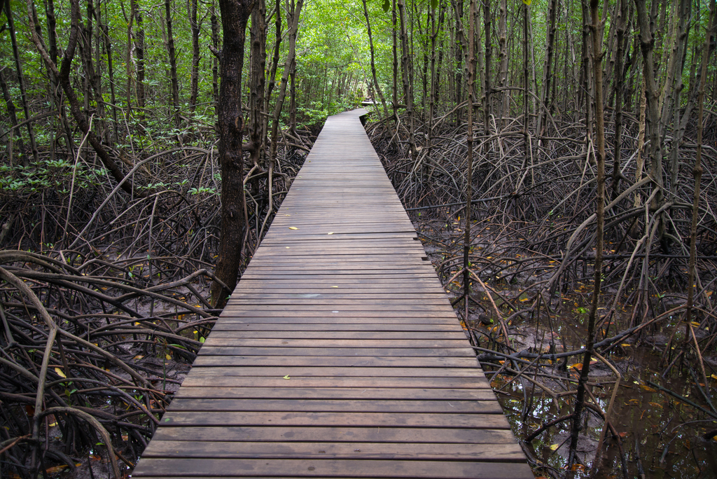 Mangrove Forests, Koh Kong Province, Cambodia