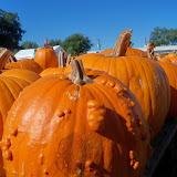 Pumpkin Patch 2014 - 116_4472.JPG