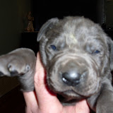 Beverlin's blue girl @ 2 weeks