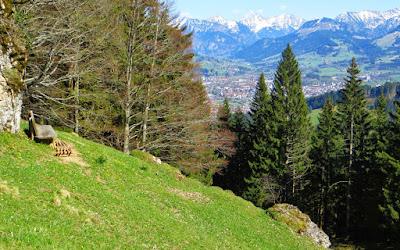 Blick Bschiesser Gaishorn Rauhhorn ImbergerHorn Breitenberg Heubatspitze Rotspitze Daumen Sonthofen Illertal Ostrachtal Allgäu