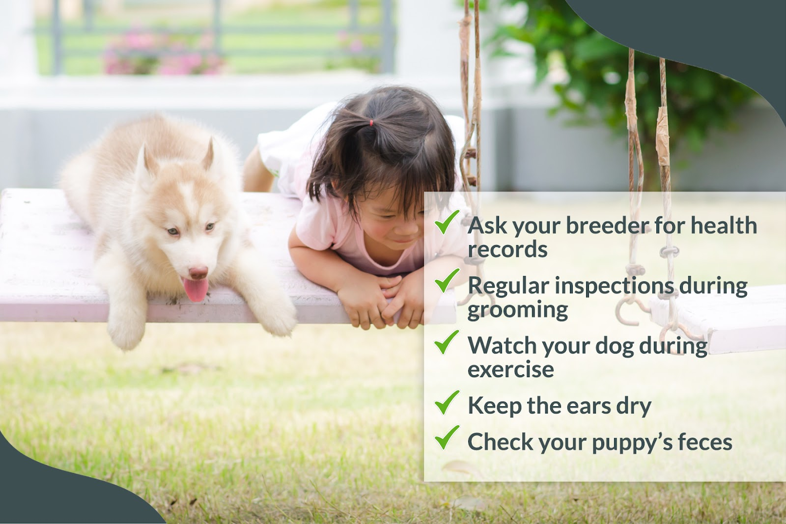 health check to perform on your dog at home