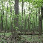 Белогорье - Заповедник лес на Ворскле 050.jpg