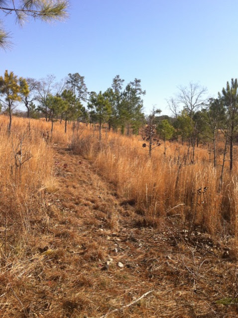 Hunting Habitat 2, Anderson Creek