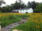 Meadow and Stream Bed