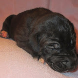 Available black girl @ 2 weeks