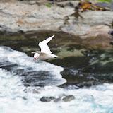 Hawaii 2013 - Best Story-Telling Photos - IMGP9368.JPG