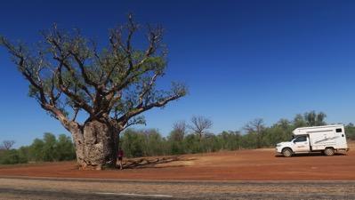 The Boab Tree