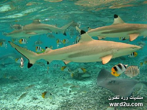 الطبيعة الساحرة Bora Bora Island