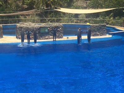 Palmitos Park dolphin show
