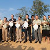 phuket event Mai Khao Marine Turtle Foundation launches Marine Turtle Nesting Site Conservation and Rehabilitation Project 017.jpg