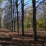 Forêt domaniale des Camaldules : allée royale