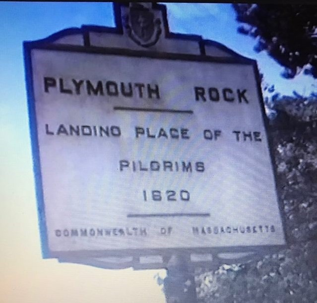 [Plymouth-Rock-19956]