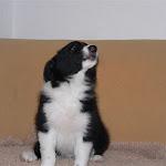 2007 Cucciolata H (3).jpg