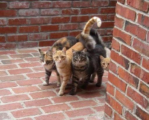 Si puedes tener más de un gato sería lo ideal. Por supuesto esterilizados. Un gato solito se aburre.