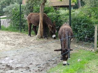 2016.05.24-042 ânes