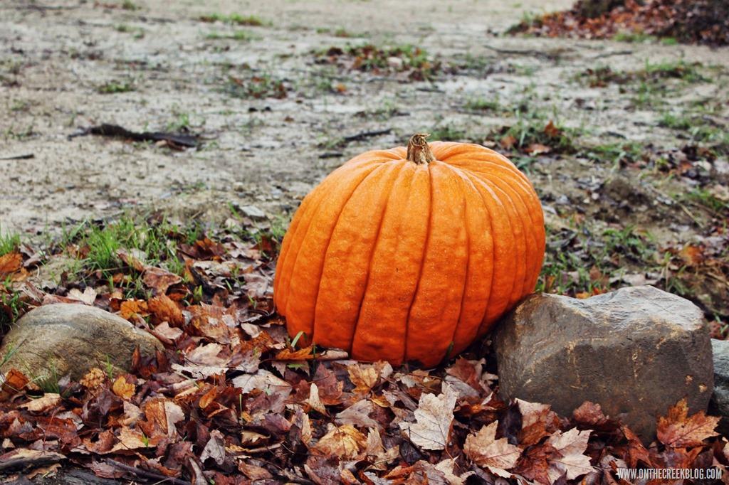 [pumpkin29%5B10%5D]