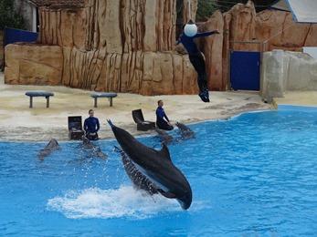 2018.08.09-029 spectacle de dauphins