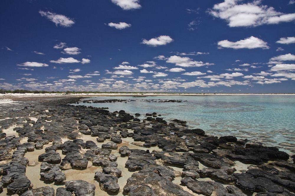hamelin-pool-stromatolites-2