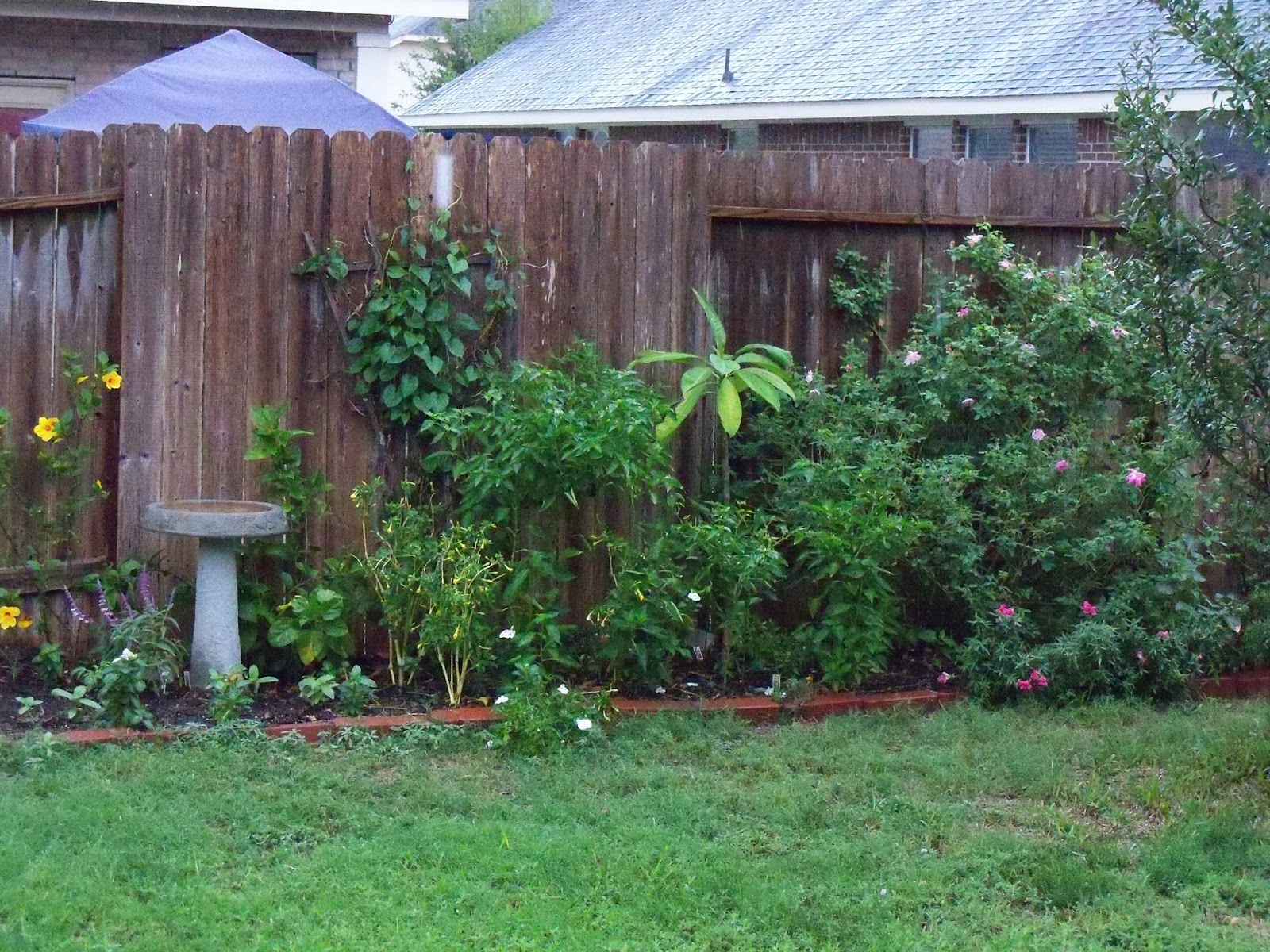 Gardening 2011 - 115_0422.JPG